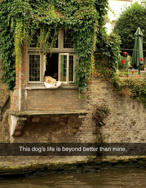 true. . This dog' s life is beyond better than mine.. what happens when the pillow falls in the river