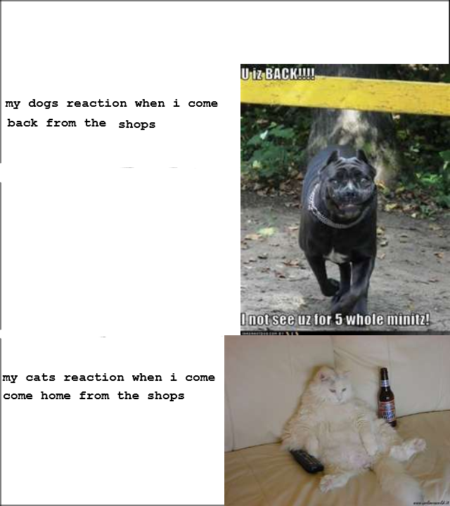 true. . my dogs reaction when i come if back: from the snaps my cats reaction when i name came home from the shops