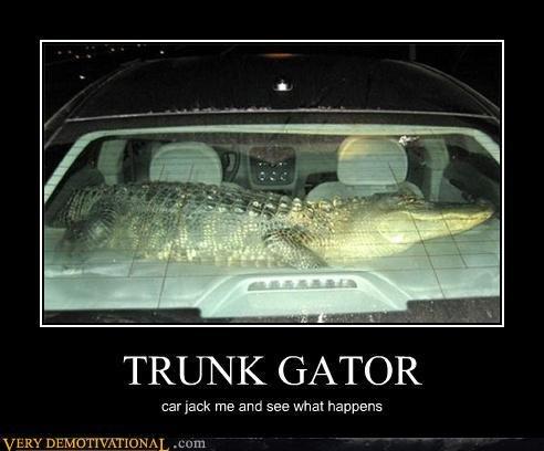 "Trunk Gator. . GATOR car ""pack me am: SEN? what happens. Backseat Gator, not in a f@#$ing trunk."