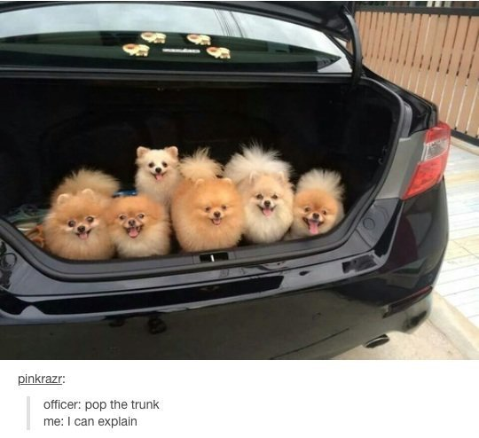 Trunk. . pup the trunk me: I can explain. When the cops find puppies in your trunk.