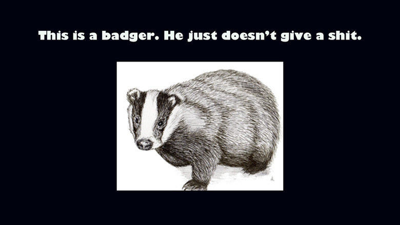 Truth. This is after the dog and the cat posts.. This is a badger. He just doesn' t give a shit.