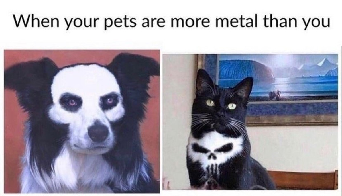 truuu 😂😂😂. .. when your pet is more mental than you so truuu