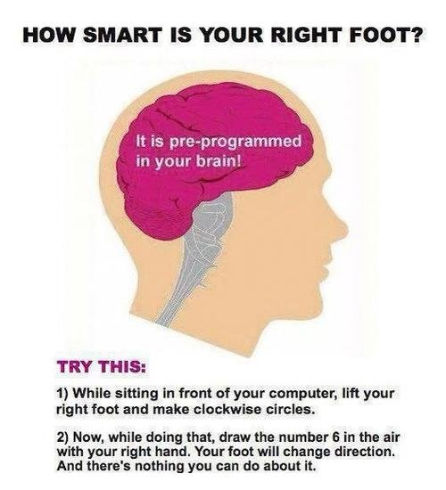 """try it. It's too confusing. HOW SMART IS YOUR RIGHT FOOT""""? in your brain! TRY THIA: 1} While sitting in front of your computors. lift your right foot and make o"""