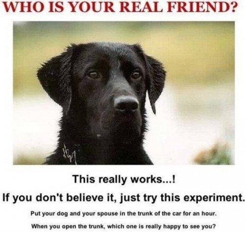 """TRY IT. SO TRUE. WHO IS YOUR REAL FRIEND? This really worke... I If you don' t believe it, just try this experiment. PM rearing """": % new when run an the trunk."""