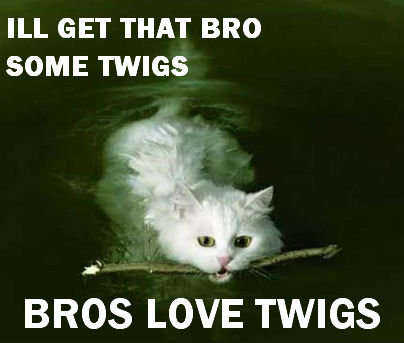Twigs. Sequel to; Bitches Love Leaves. ILL GET THAT BRO SOME TWIGS BROS Lox/ ii: TWIGS