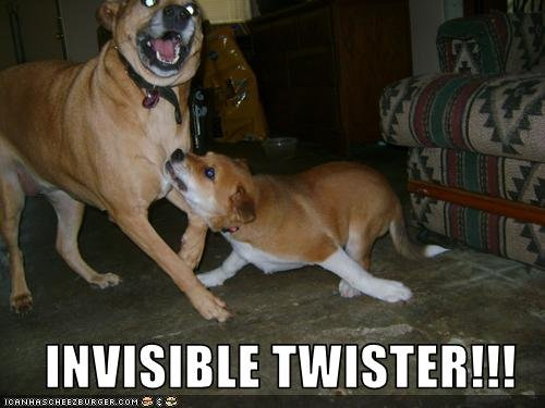 Twister. Dogs playing twister.