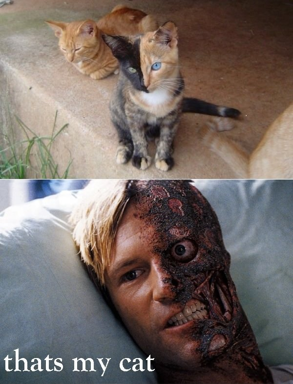 Two Face cat. -flips coin, black side. the cat has been killed.-. thats my cat. IT DOESN'T MATTER IF YOU'RE BLACK OR WHIIIIITE