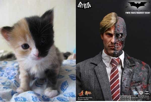 Two face Kitty. . BERT