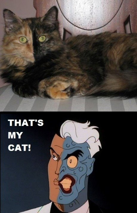 two faces cat. looks a lot like my cat...
