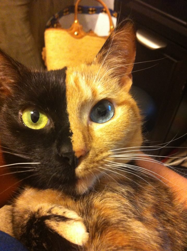 Two Face's Pet. .
