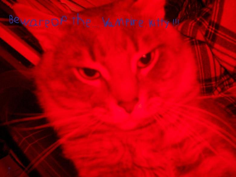 vampire kitty!. .. im not trying to make it funny its just a joke... lol captcha is roast