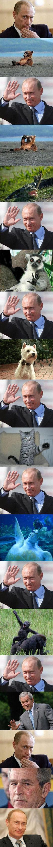 Vladimir Doolitle. Thumbs please .