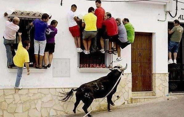waiting for the bull go away. .