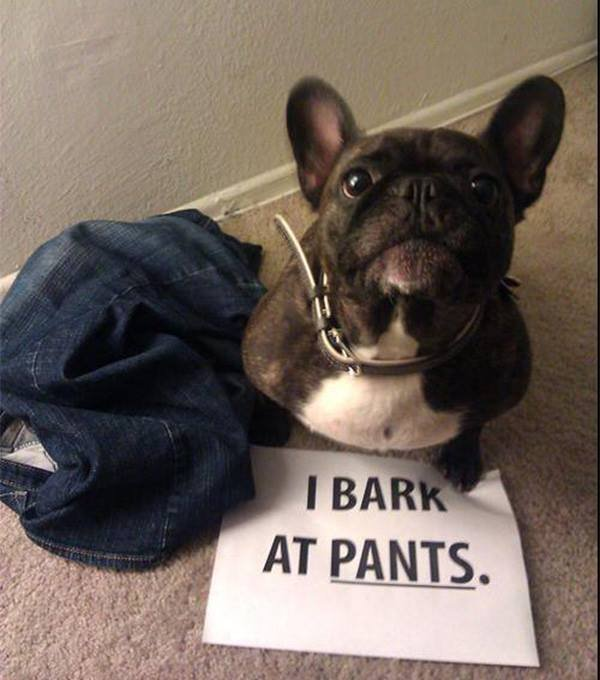wearing pant? then common!. .