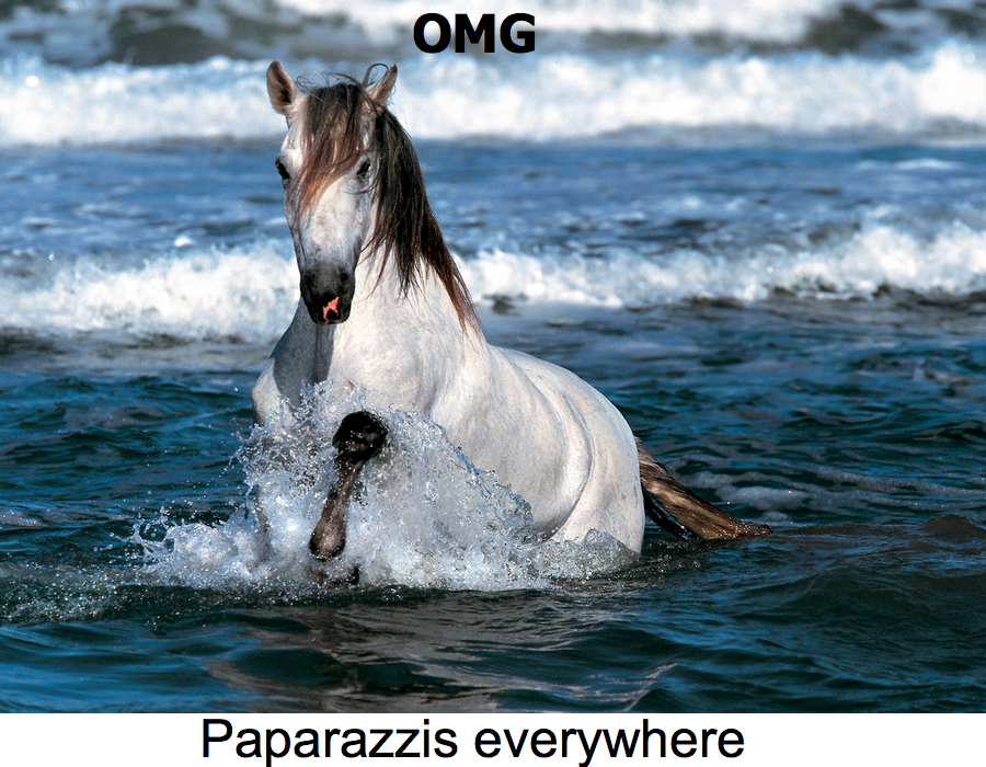 ...Went to the beach. Sarah Jessica Parker can't even go to the beach, without being spottet by paparazzis..