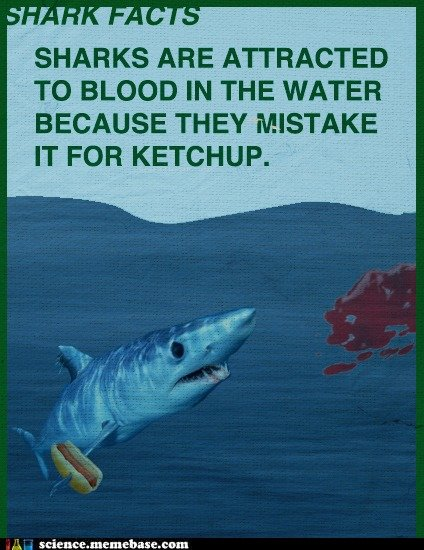 Why sharks attack. Found on Memebase. To BLOOD IN TTHE WATER BECAUSE THEY MISTAKE IT FOR KETCHUP.-