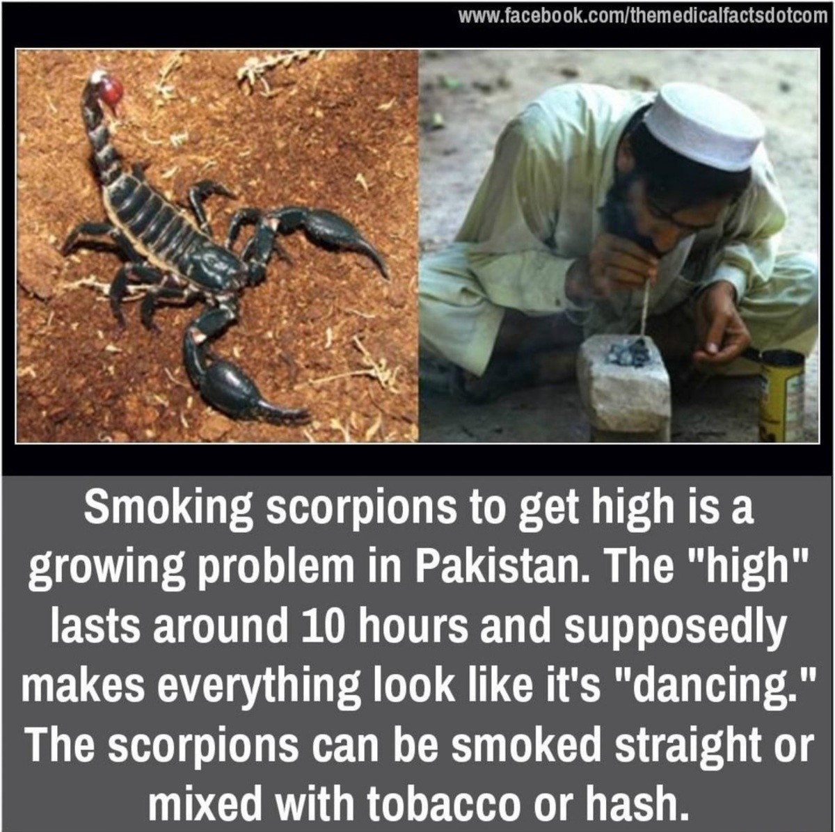 yo, come take a hit from this scorpion.... .. great now i have to find a scorpion to smoke