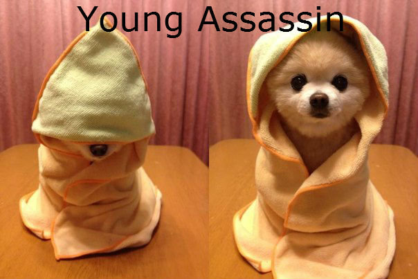 Young Assassin. Swagtastic Teddy Bear Assassin!!!!.. i just died of cuteness.