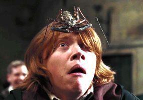 Spider on Ron Weasley