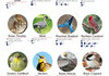The birds that officially annoy your state the most