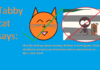 Tabby cat says: