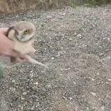 Owl tube