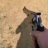 rightful dead nonchalant Peafowl