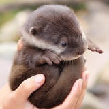 Can someone make Monday Otter Day?